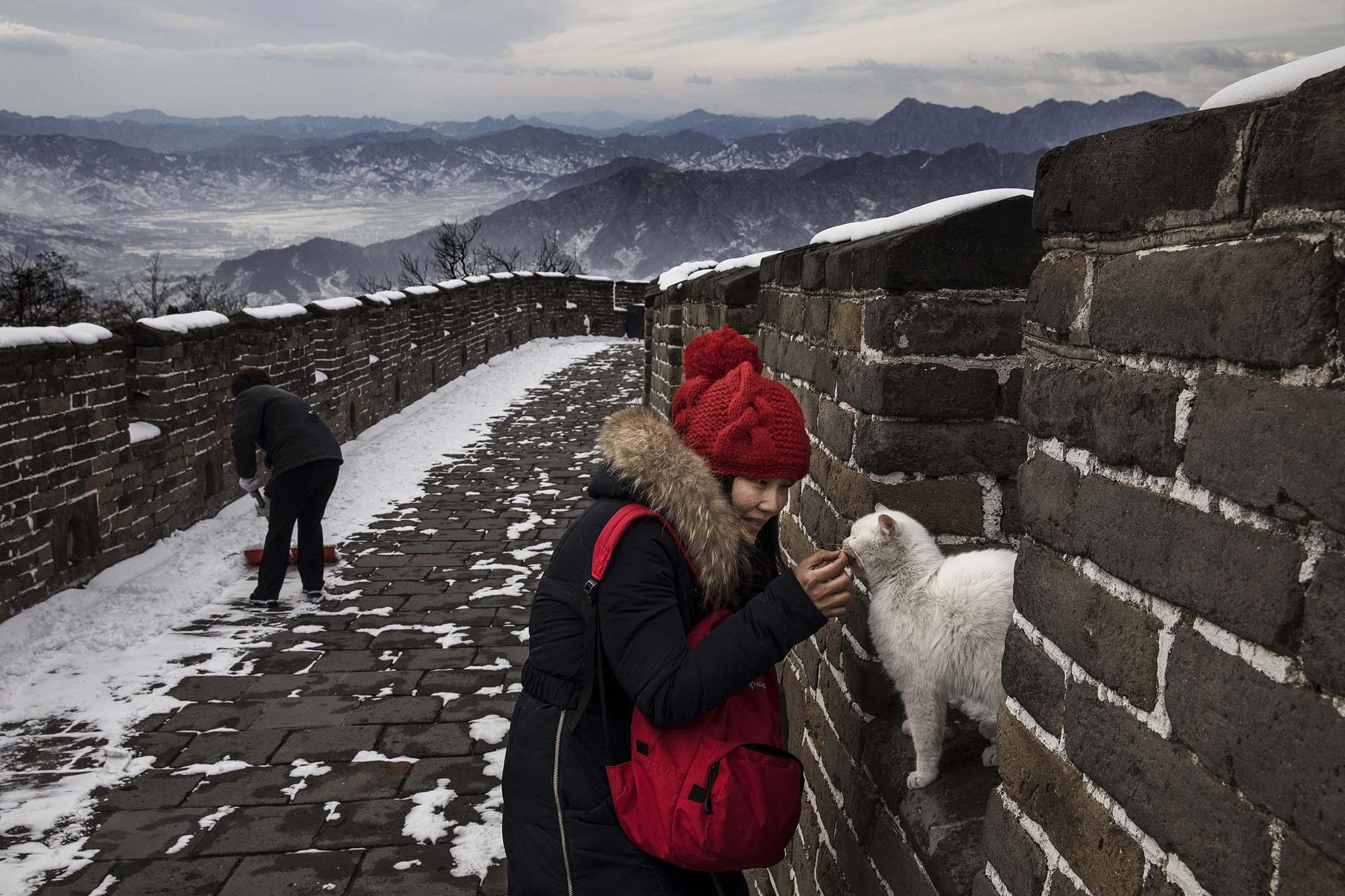 2017年02月22日中國北京,一位中國遊客在降雪後的長城散步時撫摸一隻流浪貓。
