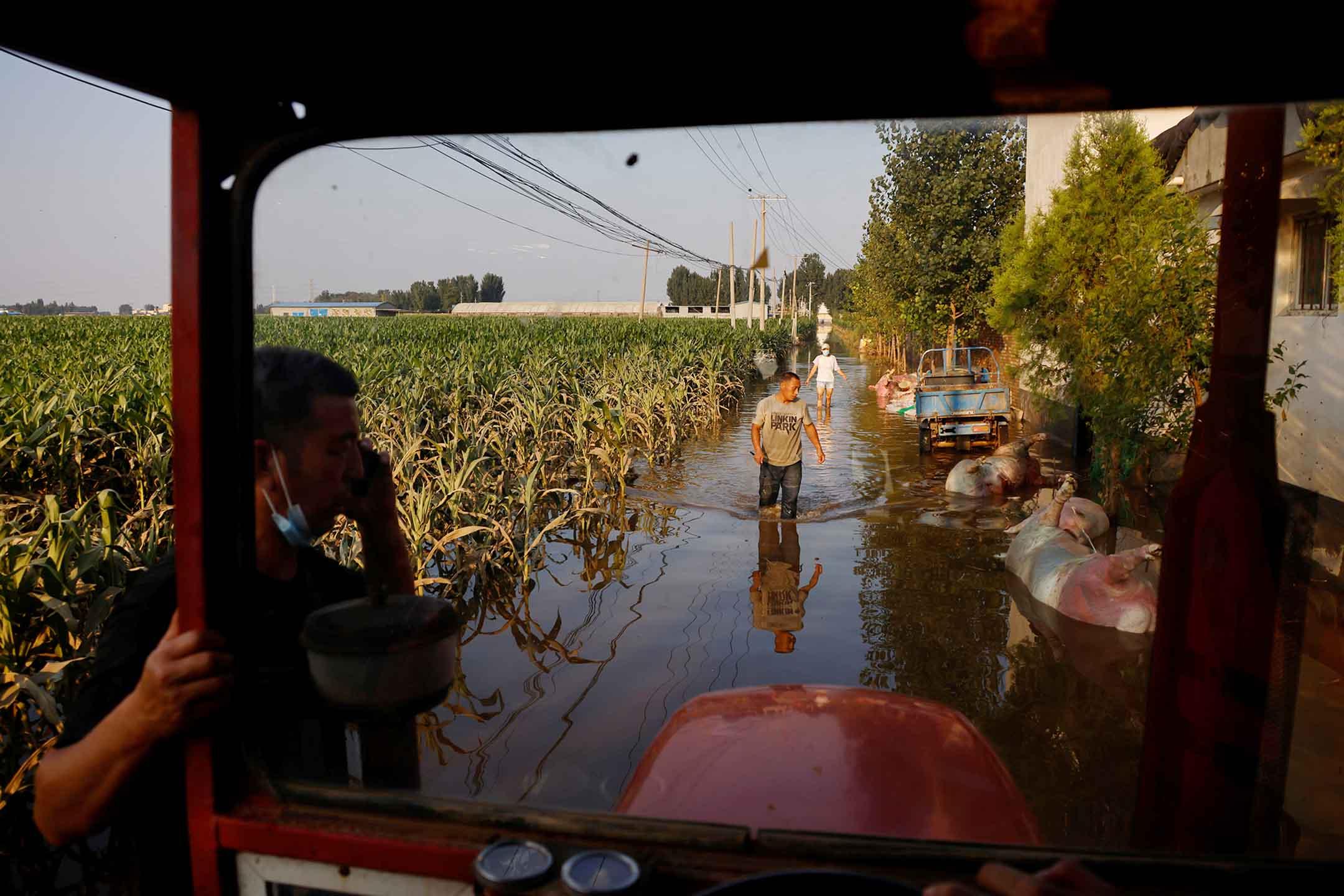 2021年7月25日中國河南省新鄉市,暴雨後豬農在洪水中走過農田旁的豬屍體。