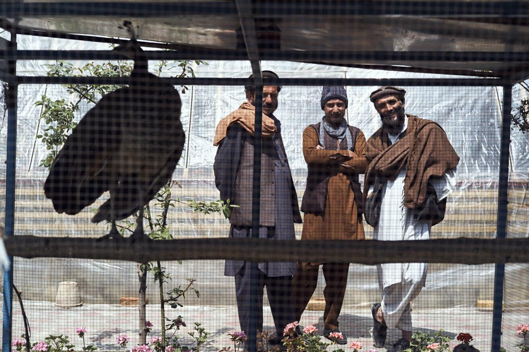 喀布爾舍爾浦附近的「花街」花鳥市場上,幾名當地商人和一隻圈養的孔雀在一起。