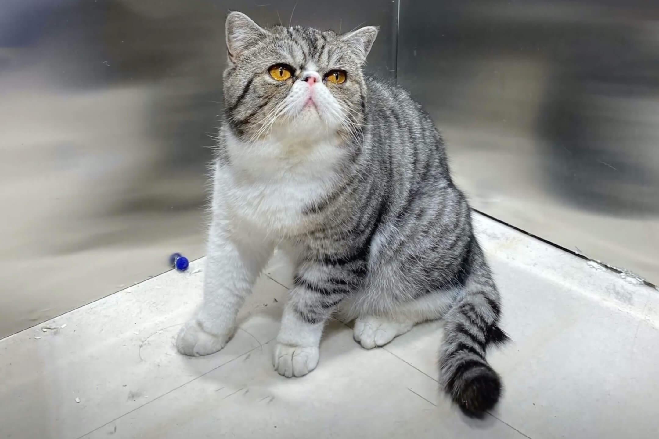 2021年9月27日,中國城市哈爾濱,一名2019冠狀病毒確診者被告知家中的3隻貓的兩次病毒核酸檢測呈陽性,需進行人道毀滅。 網上圖片