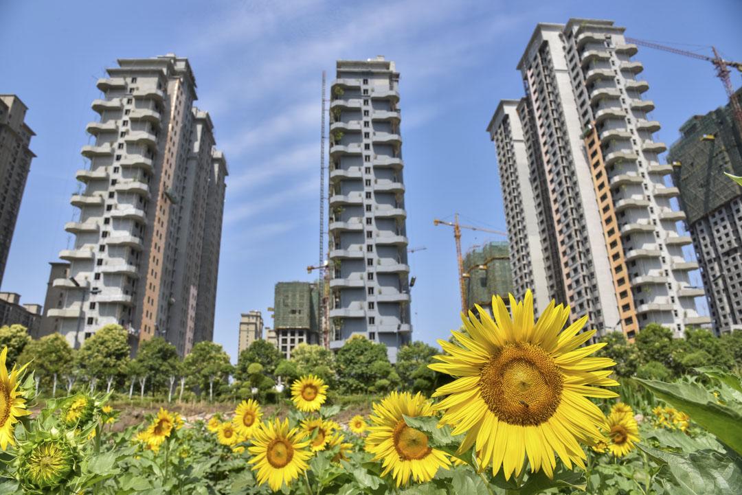 2020年6月14日,河南省洛陽市一個建築工地在向日葵後面施工中。