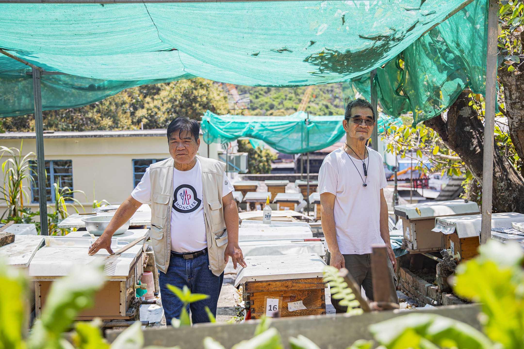 陳師傅和朋友在粉嶺布格仔村家中的後庭飼養了近50箱蜜蜂。