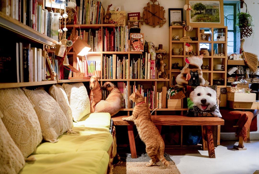 比比書屋的貓。 攝:林振東/端傳媒