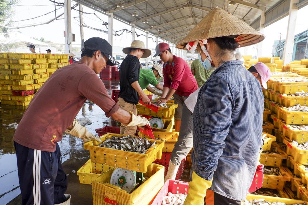 越南西南部堅江省Tac Cau港口的一個漁獲交易市場。