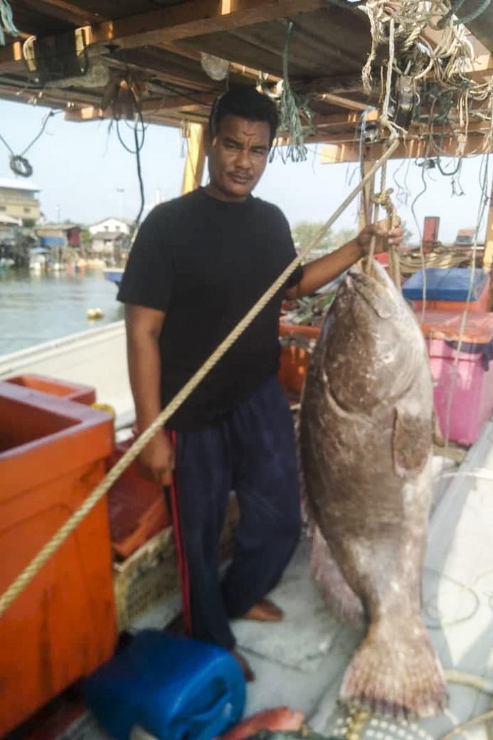 馬來西亞漁民巴希尤丁展示一條掉進了他們的「bubu」捕魚器,重100公斤的石斑魚。
