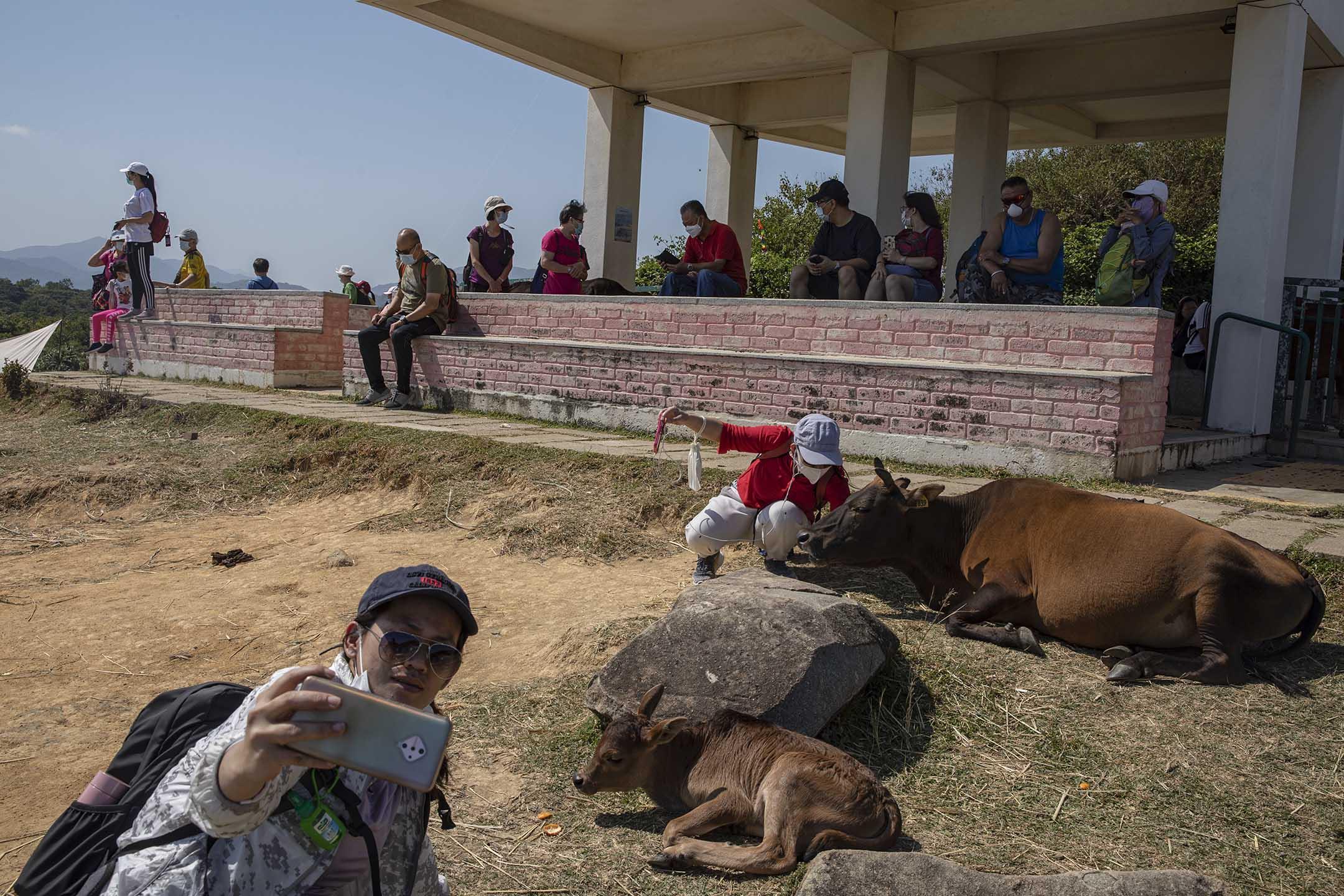 來訪塔門的遊人與黃牛合照。