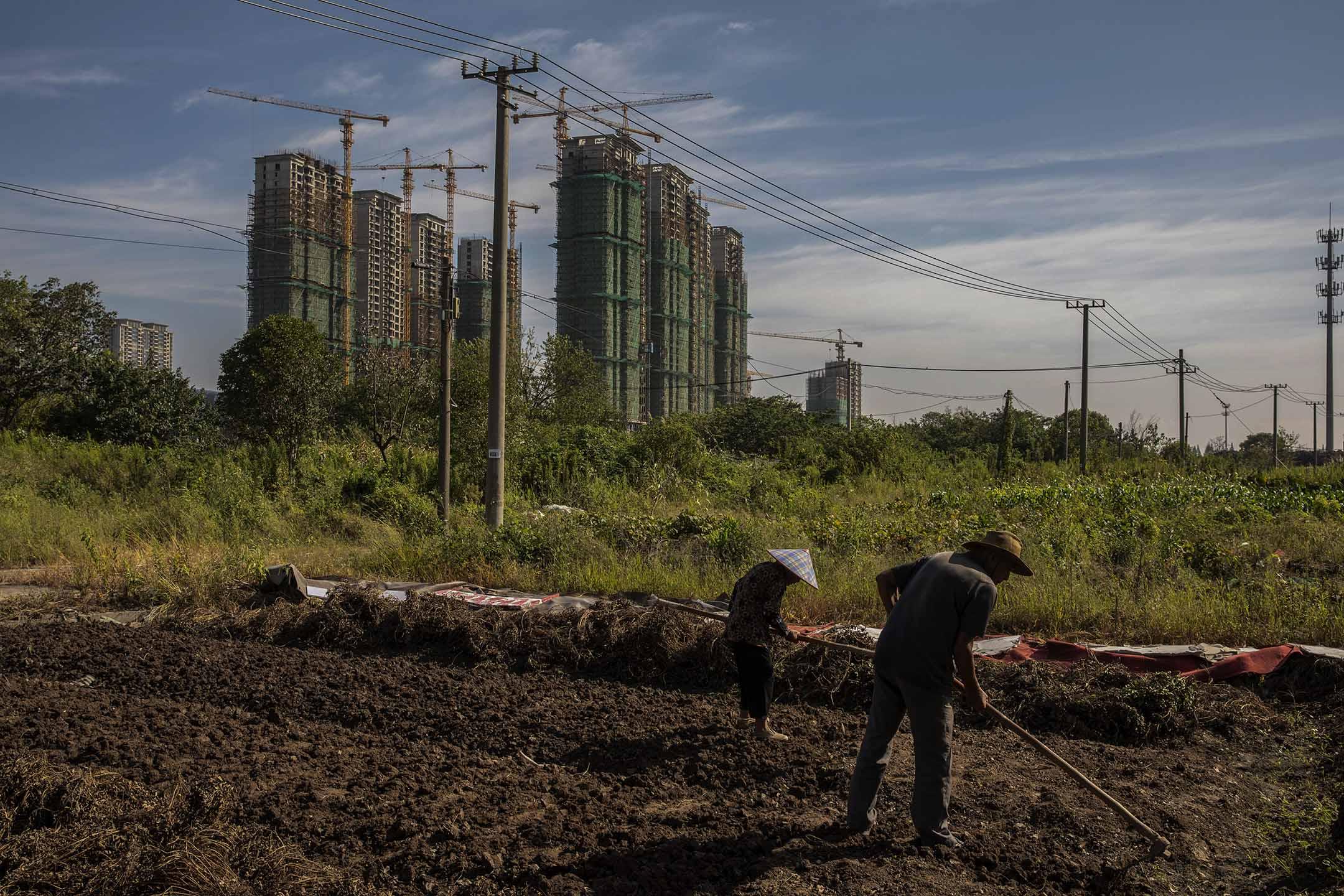 2021年9月24日中國江蘇省太倉市,恆大集團的開發項目,農民在高層公寓附近種菜。 攝:Qilai Shen/Bloomberg via Getty Images