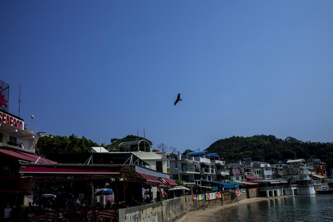 榕樹灣沿岸上的一隻鳥。